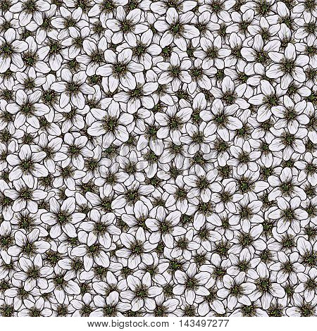 Illustration of Anemone nemorosa.Pattern full with Anemone,