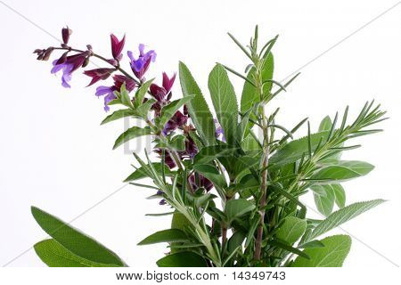 Fresh rosemary, oregano, and flowering sage, with white background.