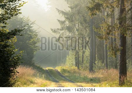 Country road through the forest on a misty morning