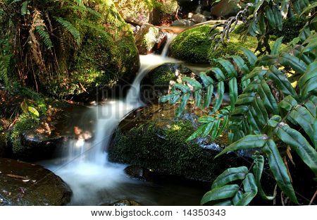 Acercamiento del arroyo que fluye sobre rocas cubiertas de musgo, rodeados de exuberante selva helechos.