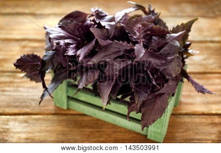 Red basil in crate on wooden table