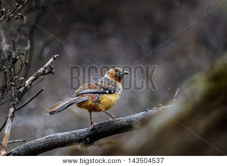 Bird perched on the branch in Yading Nature Reserve.
