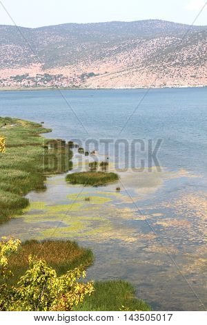 picture of a lake Prespa in Albania in summer
