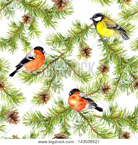 Winter birds finch, tit at branches of christmas tree with cones. Seamless pattern. Watercolor