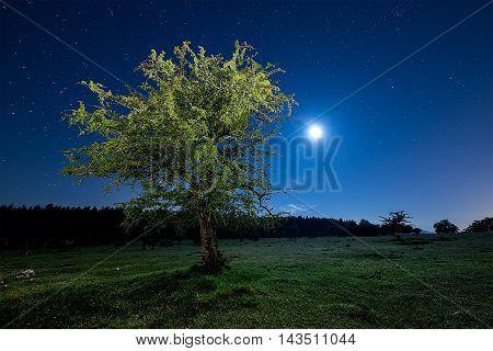 Beech at night illuminated wiyh a torch