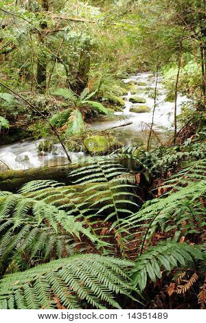 Tranquility ~ lush tree ferns on the banks of a soft-flowing river.  Victoria, Australia.