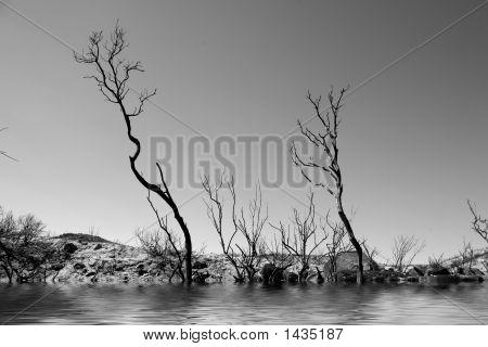 Striking Landscape In Monochrome