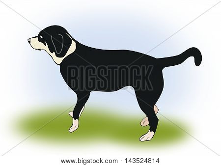 Illustration of a black dog standing in the grass.