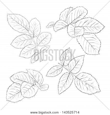 set of beautiful black and white rose leaves isolated on white. Hand-drawn contour lines and strokes.