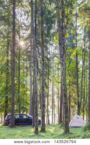 Camping tent and a car in green forest