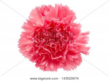 red flower carnation flower on a white background