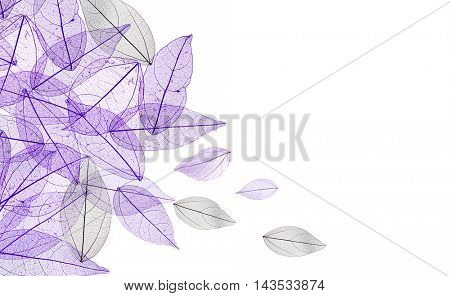 Decorative skeleton leaves on white background. Space for text.