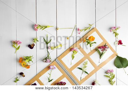 Collection of flowers in notebook