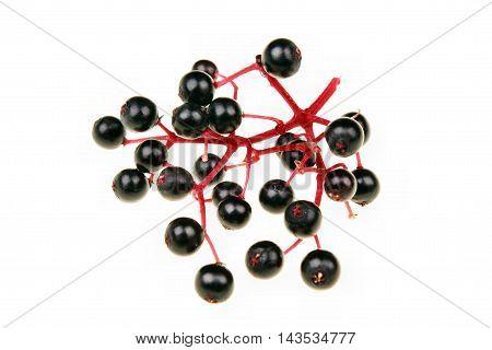 Black elderberry fresh natural fruit isolated sambucus nigra