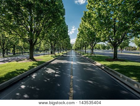 The Road Leaving Keeneland in summer with trees lining it