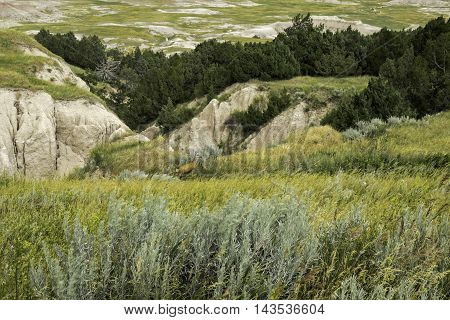 Badlands Meadow with a mule deer in the background