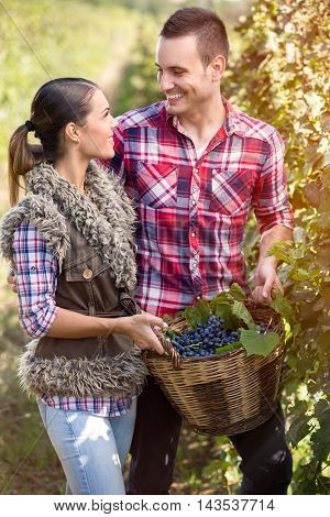 couple in love in vineyard in the season of the grape harvest, looking at each other
