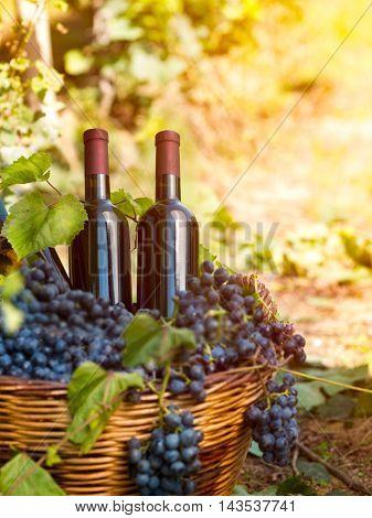 wine bottles with no label in vineyard