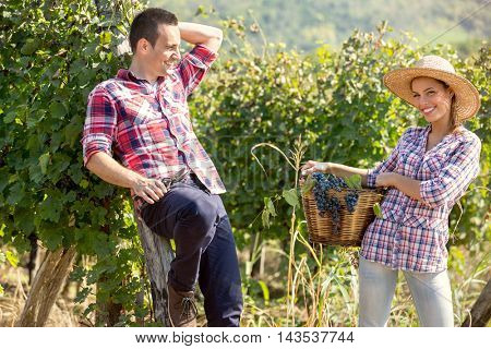 Cheerful young couple in vineyard at harvest time