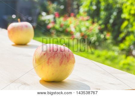 Two apples close up on a wooden table in a flowering garden on a sunny summer day the backlight. Selective focus