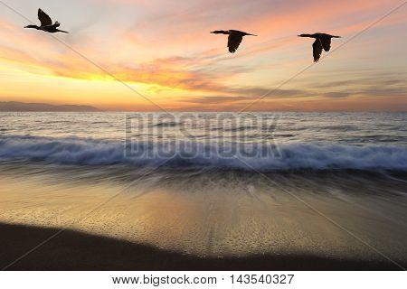 Ocean sunset birds beautiful eabirds flying as one at sunset as an ocean wave rolls to shore