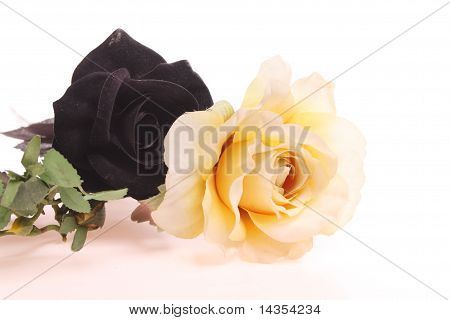 Black Rose And Yellow Rose Over White