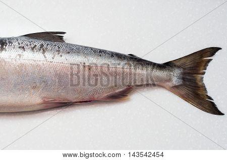 Salmon Fishs On White Background