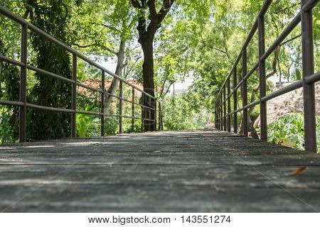 Footpath with green tree on both sides.