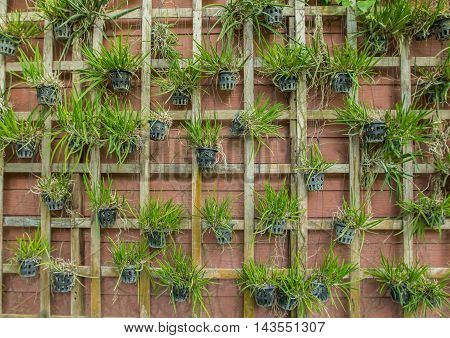 Wood frame decorate with Green flower on the wall.
