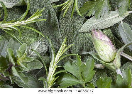 Hintergrund der frischen Kraut Laub.  Enthält Salbei, Rosmarin, Oregano und Petersilie, mit Salbei Blütenknospe