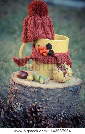 Vintage Photo, Cup Of Beverage With Woolen Cap Wrapped Scarf On Wooden Stump