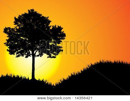 beautiful sunset. High-detailed silhouette of tree.