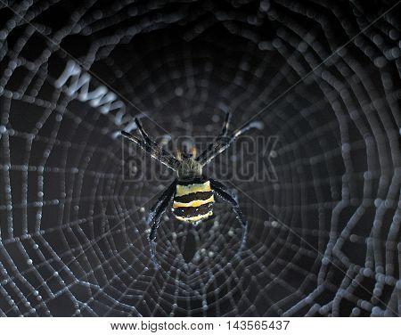 Spider on Spider webs