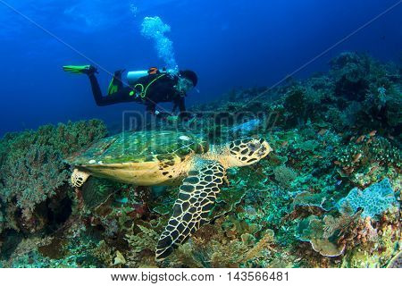 Scuba dive with sea turtle