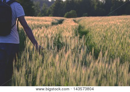 The man with backpack in wheat field