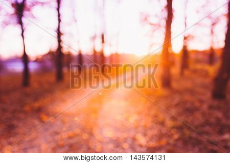 Abstract Autumn Summer Natural Blurred Forest Background. Bokeh, Boke Woods With Sunlight, Red and Yellow Warm Colors of Nature.