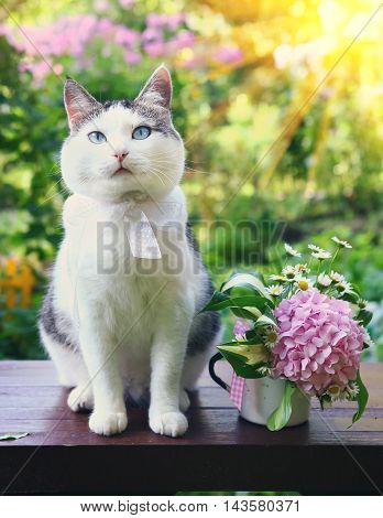 blue eyed tom cat sit on wooden bench with hydrangea bouquet on the blossom summer sun garden background