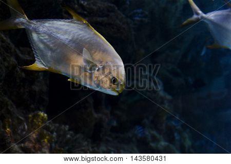Beautiful sea fish swims in the sea water