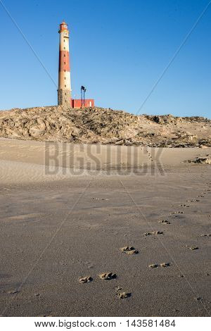 Footprints Of Beach Wolf By Lighthouse