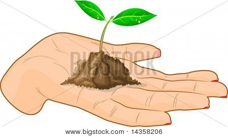 Young sprout in a hand. Vector illustration.