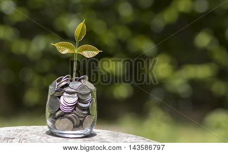 Young plant growing in the glass jar that have money (coins) - savings and investment concept