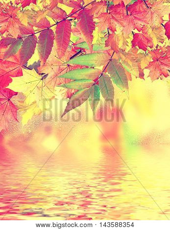 Autumn landscape. Colorful trees. foliage. Indian summe