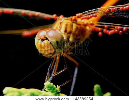 Dragonfly in the garden on a branch closeup