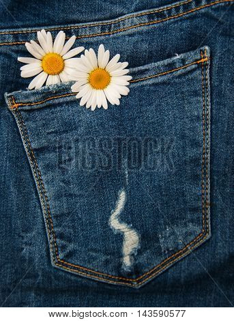 Daisy In Jeans Pocket