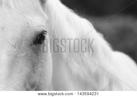 close up of horse standing in paddock