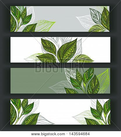 Set of horizontal banners decorated with patterned sprouts and leaves of tea. Tea design.