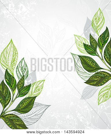 Design with patterned green and gray leaves of tea on a gray textural background. Tea design.