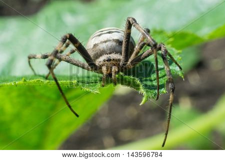 The photo depicts a spider on a green leaf