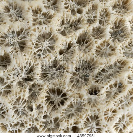 full frame macro shot of a stony coral