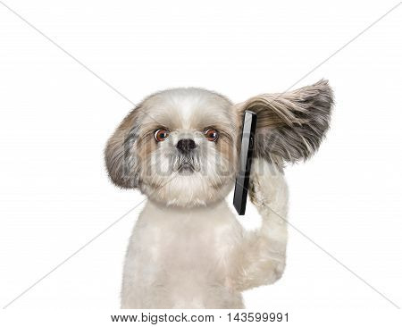 Dog is talking over the mobile phone -- isolated on white